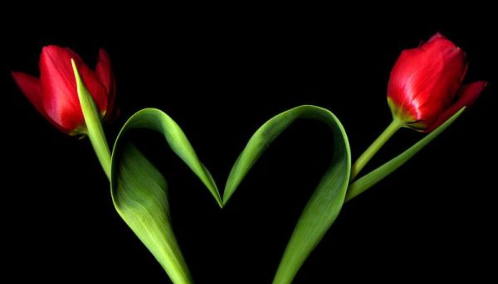 heart-of-leaf-with-roses