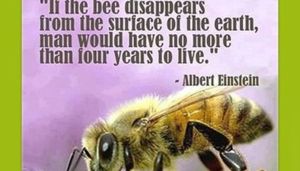 dont-hate-bees